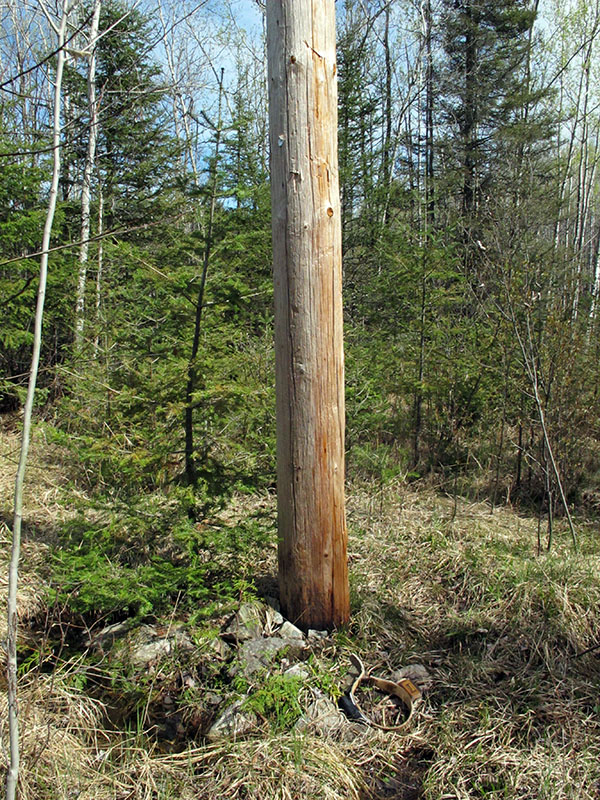 Utility pole bears have marked