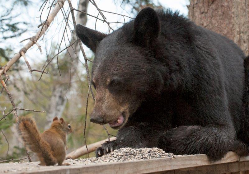 нее, тогда медвежонок и белка фото вот