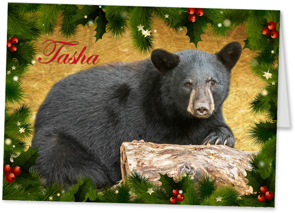 Quill tasha christmas card pavilion update october 19 for Wildlife christmas cards 2016