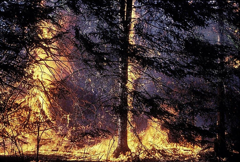 forest fires research paper Category: essays research papers title: forest fires title: length color rating : essay on the effects of forest fires on local flora - plants, trees, and other similar organisms constitute the community of a forest.
