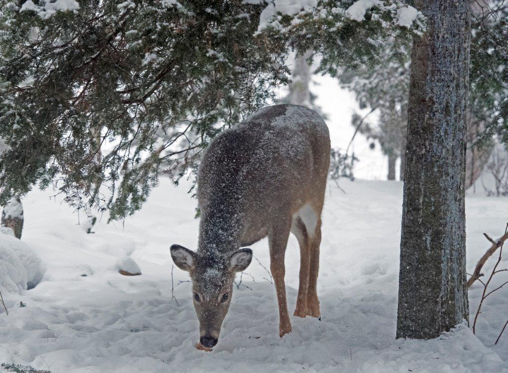 Big Snow Day, Interns Needed